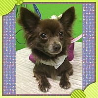 Adopt A Pet :: Sweetie - South Gate, CA