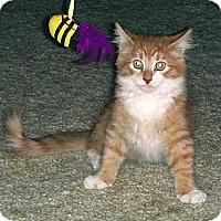 Adopt A Pet :: Picard & Pongo - Chesapeake, VA