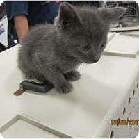 Adopt A Pet :: Bobbie - Sterling Hgts, MI