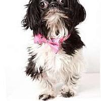 Adopt A Pet :: Mia - New York, NY