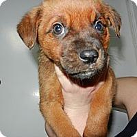 Adopt A Pet :: Oswald - South Jersey, NJ