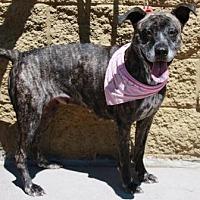 Adopt A Pet :: Marie - Gilbert, AZ