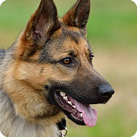 Adopt A Pet :: Yanni - Dacula, GA