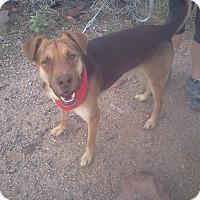Adopt A Pet :: PRINCE ERIC - Higley, AZ