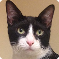 Adopt A Pet :: Domino - Winchester, CA