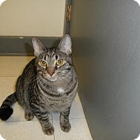 Adopt A Pet :: Reese - Milwaukee, WI