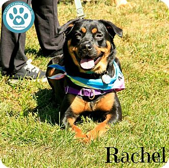 Rottweiler Mix Dog for adoption in Kimberton, Pennsylvania - Rachel