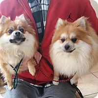Adopt A Pet :: Fluffy & Prince - Monroe, CT