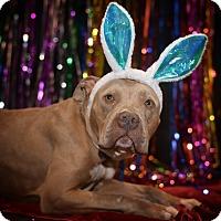 Adopt A Pet :: Lana - St. Louis, MO