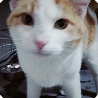 Adopt A Pet :: Candy - Jackson, MO