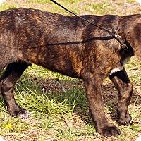 Adopt A Pet :: Nicholas - Maynardville, TN