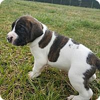 Adopt A Pet :: Washington $250 - Seneca, SC