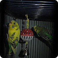 Adopt A Pet :: Jake & Luna - Neenah, WI
