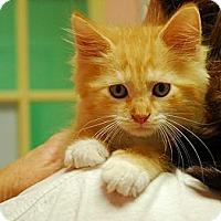 Adopt A Pet :: Emma #3 - Lunenburg, MA
