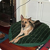 Adopt A Pet :: Sam - Knoxville, TN