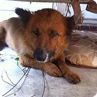 Adopt A Pet :: COURTNEY - Glastonbury, CT