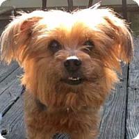 Adopt A Pet :: Mister Bear - Cleveland, OH