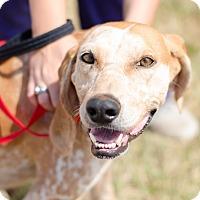 Adopt A Pet :: Ruby $125 - Seneca, SC