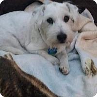 Adopt A Pet :: Trixie - Ogden, UT