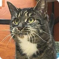 Adopt A Pet :: Gizmo - Fairfax, VA