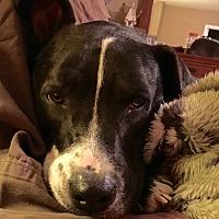 Adopt A Pet :: River Sue - San Antonio, TX