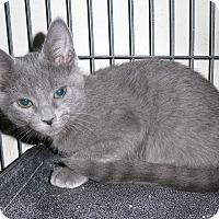 Adopt A Pet :: Carla - Tomball, TX