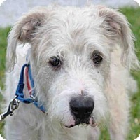 Adopt A Pet :: KLAUS - West Palm Beach, FL
