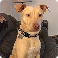 Adopt A Pet :: Blanco - Gig Harbor, WA