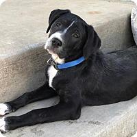 Adopt A Pet :: Jasmine - Los Banos, CA