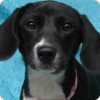 Adopt A Pet :: Bethany Gabbey - Cuba, NY