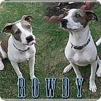 Adopt A Pet :: Rowdy - Bakersfield, CA