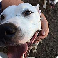 Adopt A Pet :: Autumn - Phoenix, AZ