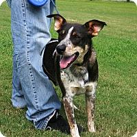 Adopt A Pet :: Odie - Franklin, TN