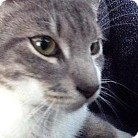 Adopt A Pet :: Difference - Trevose, PA