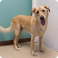Adopt A Pet :: George - Austin, TX