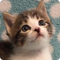 Adopt A Pet :: Galadriel - Union, KY