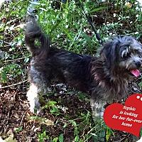 Adopt A Pet :: Sophie - Franklinton, NC