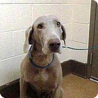 Adopt A Pet :: Kismet - Sun Valley, CA