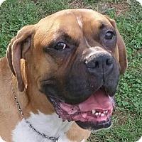 Adopt A Pet :: Gunnar - Hagerstown, MD