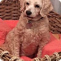Adopt A Pet :: Bailey - Oceanside, CA