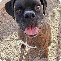 Adopt A Pet :: ATOM - Boise, ID