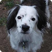 Adopt A Pet :: Astro - Adoption Pending - Lee's Summit, MO