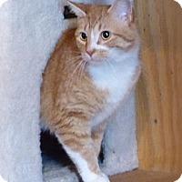 Adopt A Pet :: Tig - Monterey, VA