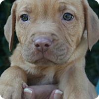 Adopt A Pet :: Paprika - Holly Springs, NC