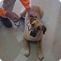 Adopt A Pet :: Sarah - Newnan City, GA