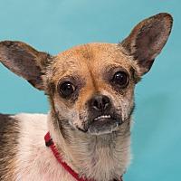 Adopt A Pet :: Cancun - Grayslake, IL