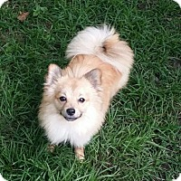 Adopt A Pet :: Finch - conroe, TX