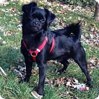 Adopt A Pet :: Jax - Hamilton, ON