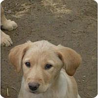 Adopt A Pet :: Florence - Glastonbury, CT