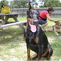 Adopt A Pet :: Ike - Green Cove Springs, FL